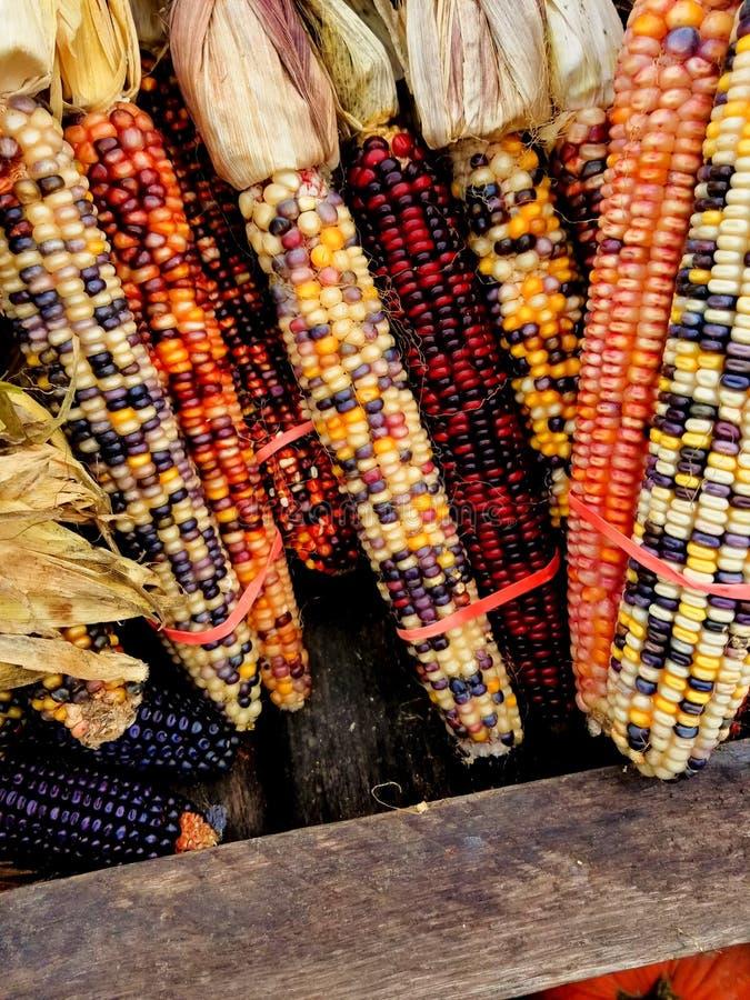 Kukurudza dla sprzedaży fotografia stock