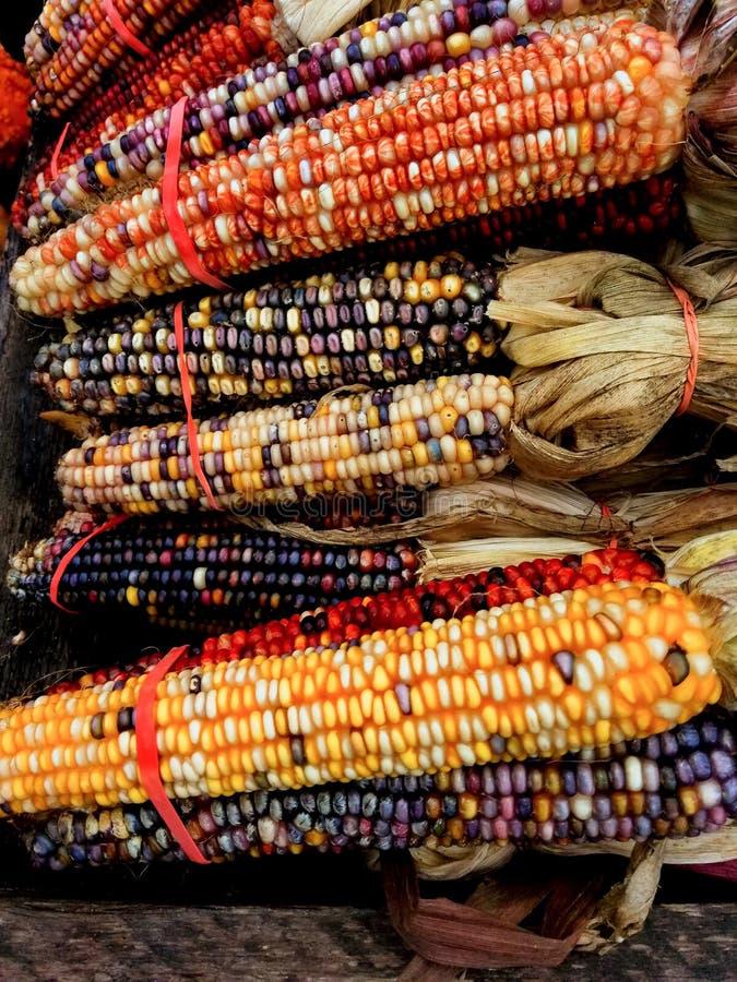 Kukurudza dla sprzedaży obrazy stock
