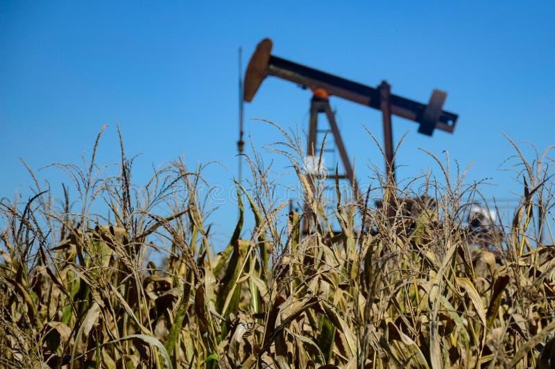Kukurudza i olej Prosperuje w polu obrazy royalty free