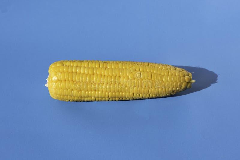 Kukurudza na błękitnym tle zdjęcia stock