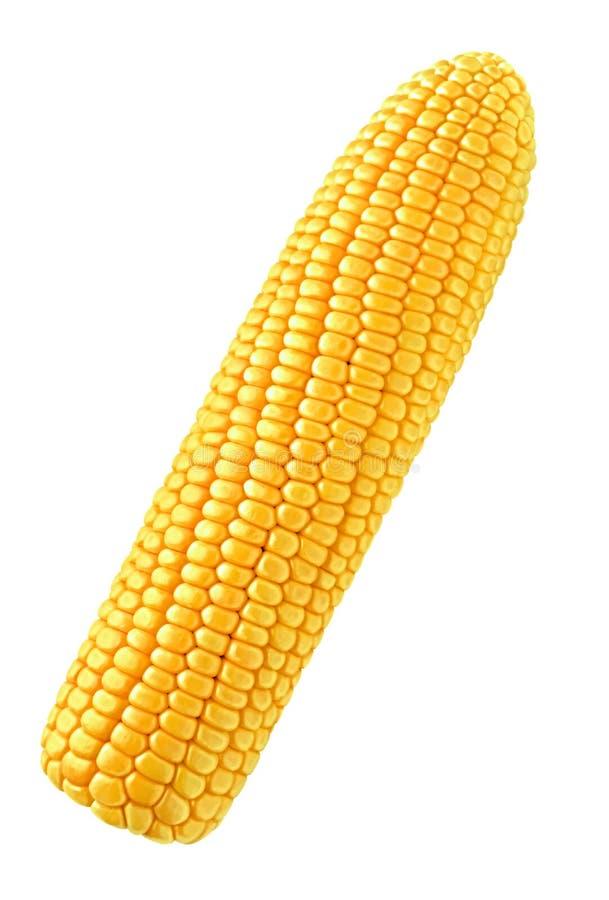 kukurudza pojedyncza obrazy stock