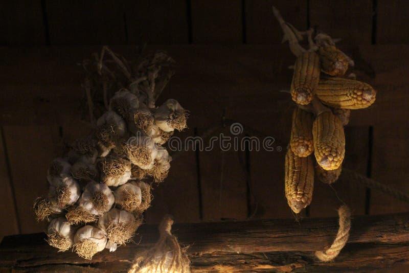 Kukurudze i garlics obraz stock