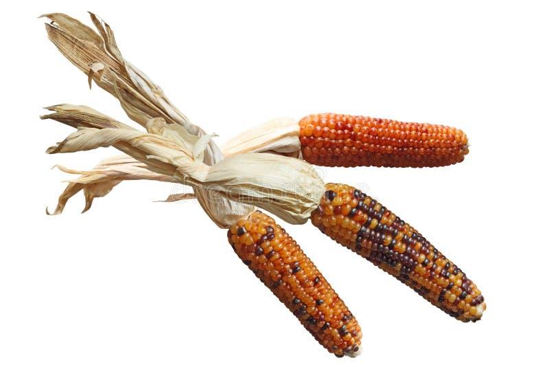 kukurudze indyjskie obraz stock