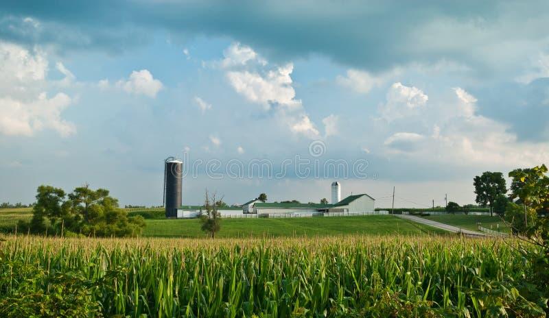 kukurudzy gospodarstwa rolnego krajobraz zdjęcie stock