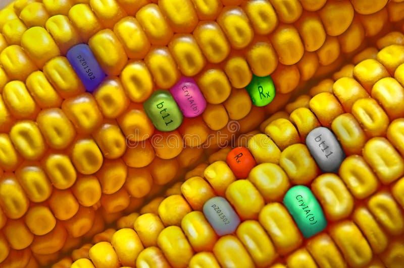 Kukurudzy ziarno zdjęcia stock