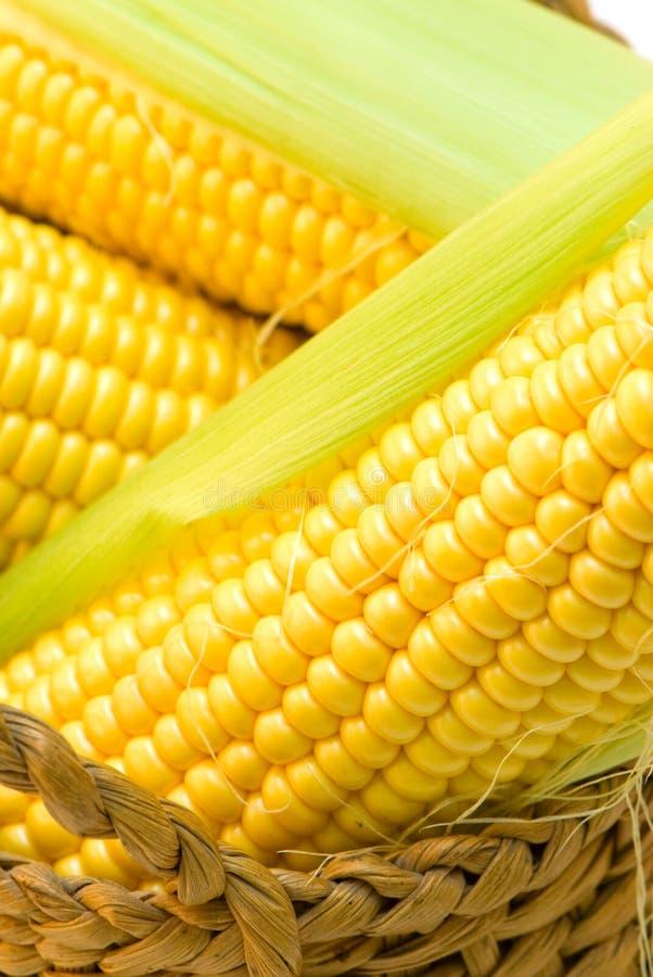 kukurydza obraz stock