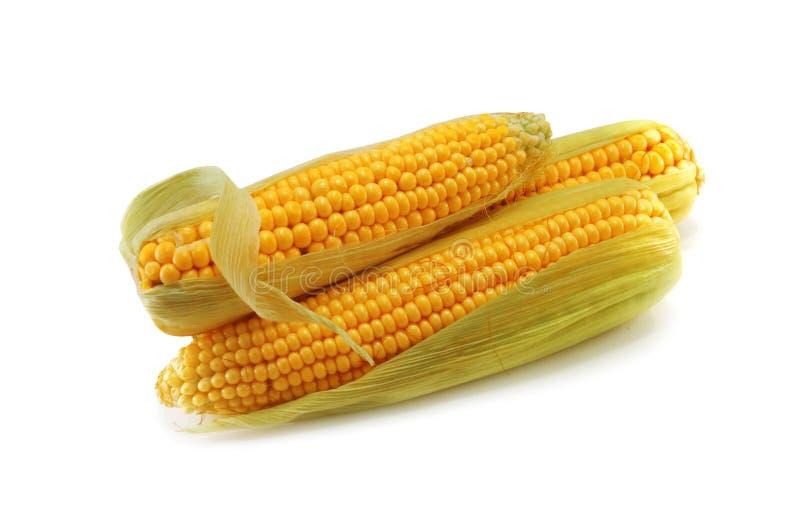 kukurydza obraz royalty free