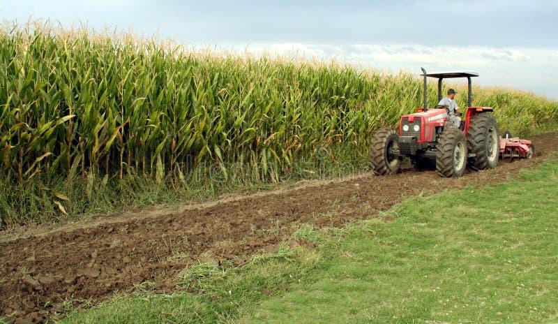 kukurydza kukurydziany ciągnika obraz royalty free