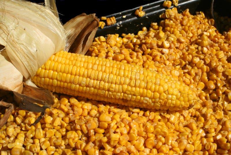 kukurydza palone zdjęcie royalty free