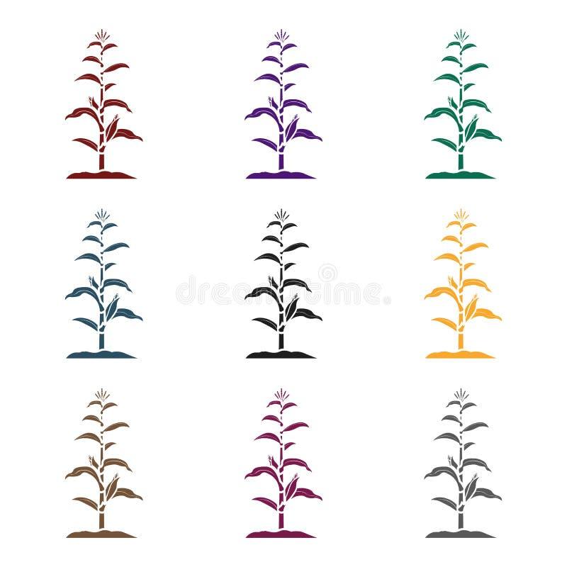 Kukurydzana ikona w czerń stylu odizolowywającym na białym tle Roślina symbolu zapasu wektoru ilustracja ilustracja wektor