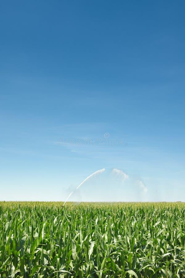 kukurydzana irygacja obrazy royalty free
