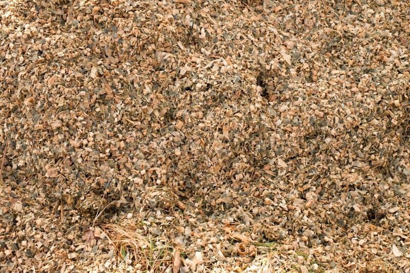 Kukurydzana kukurydzy kiszonka mlejąca jako zwierzęca karma Odpady od kukurydzanego łuskanie procesu obrazy royalty free