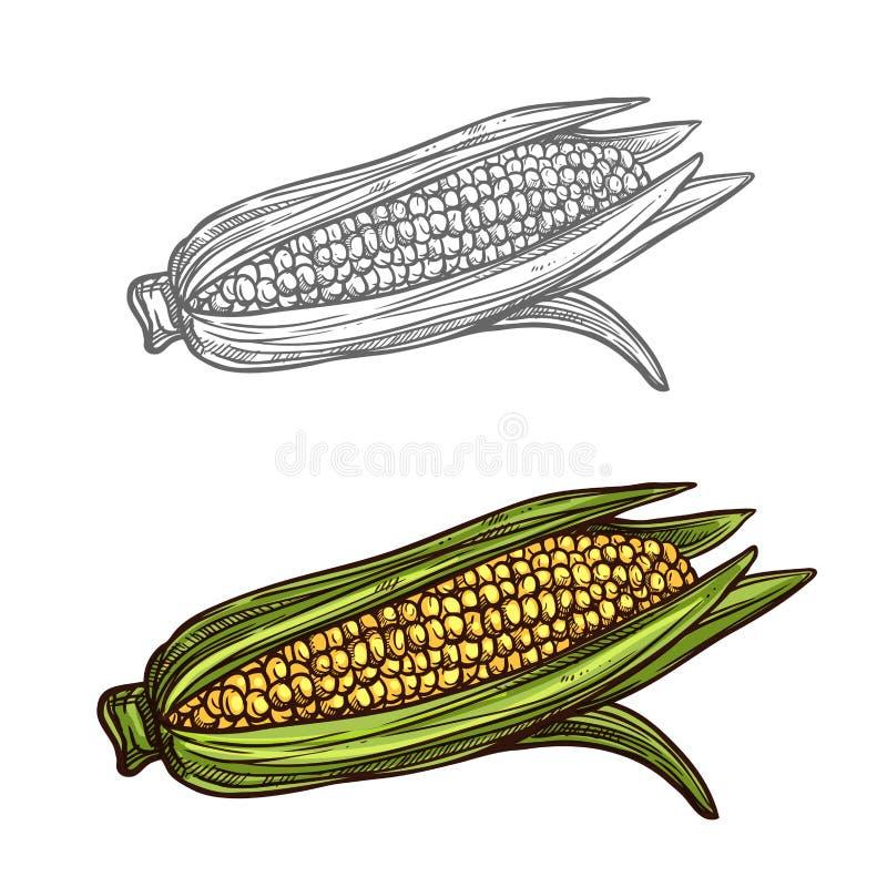 Kukurydzanego cob nakreślenia warzywa wektorowa ikona ilustracji