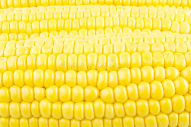 Kukurydzanego cob zbliżenie obrazy royalty free