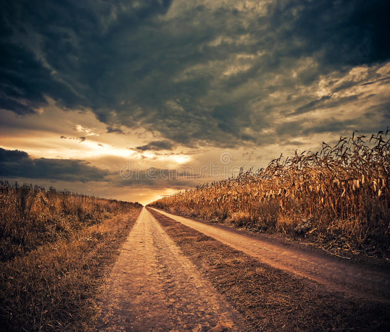kukurydzanego pola droga obrazy stock