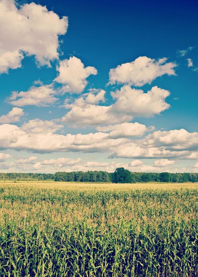 Kukurydzanego pola i chmurnego nieba instagram przełaz obraz stock