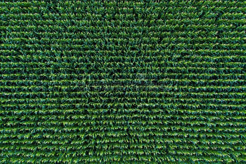 Kukurydzanego pola widok od above fotografia stock