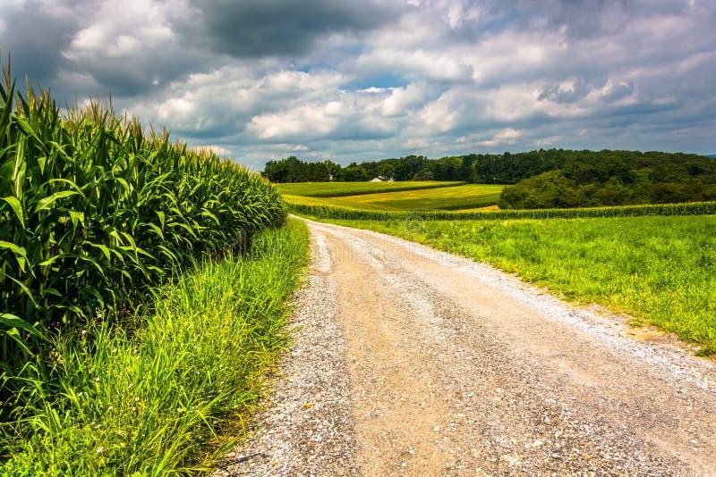 Kukurydzani pola wzdłuż drogi gruntowej w wiejskim Carroll okręgu administracyjnym, Maryland fotografia stock