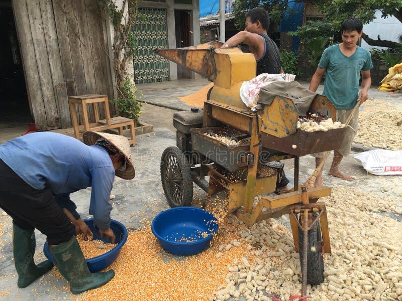 Kukurydzany łuskanie w Wietnam zdjęcie stock