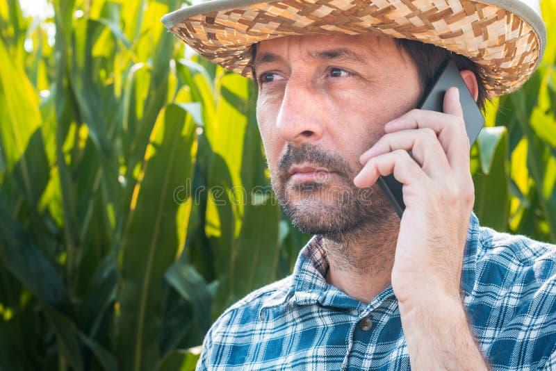 Kukurydzany średniorolny opowiadać na telefonie komórkowym w uprawy polu obrazy stock