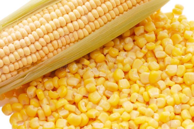 kukurydzany świeży cynowany zdjęcie royalty free