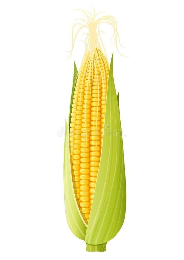 Kukurydzany cob Żywność organiczna ilustracji