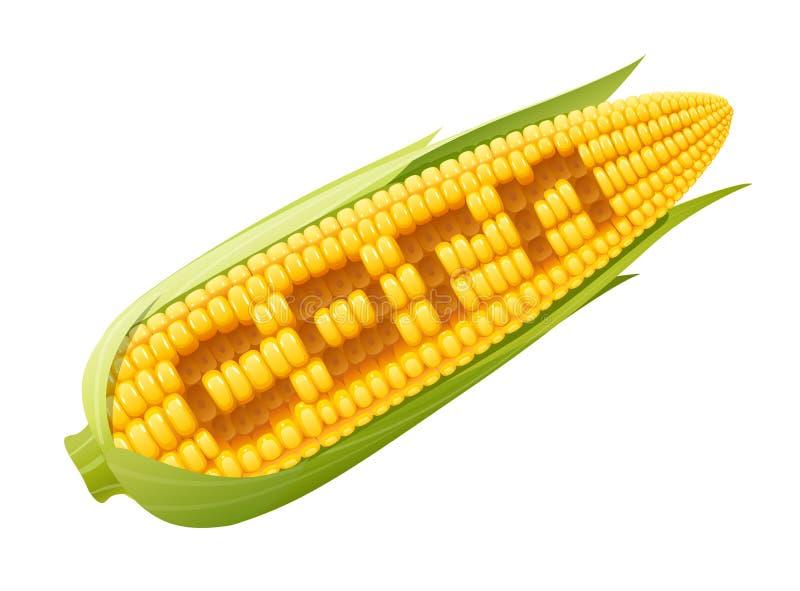 Kukurydzany cob Żywność organiczna ilustracja wektor