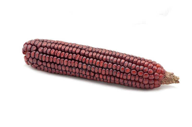 Kukurydzany cob zdjęcia stock