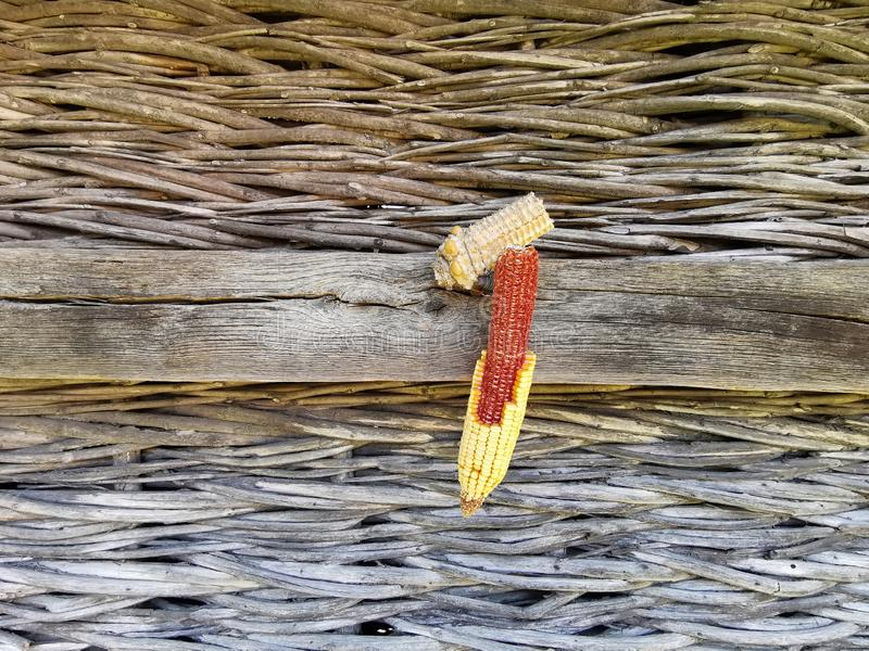 Kukurydzany cob stronniczo oplewiony na starym drewnie obrazy stock