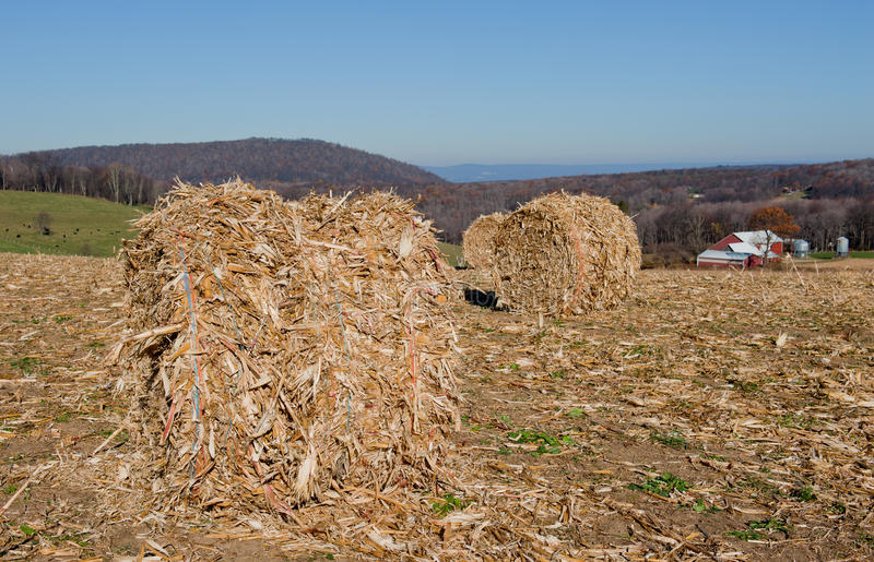kukurydzany husker obraz stock