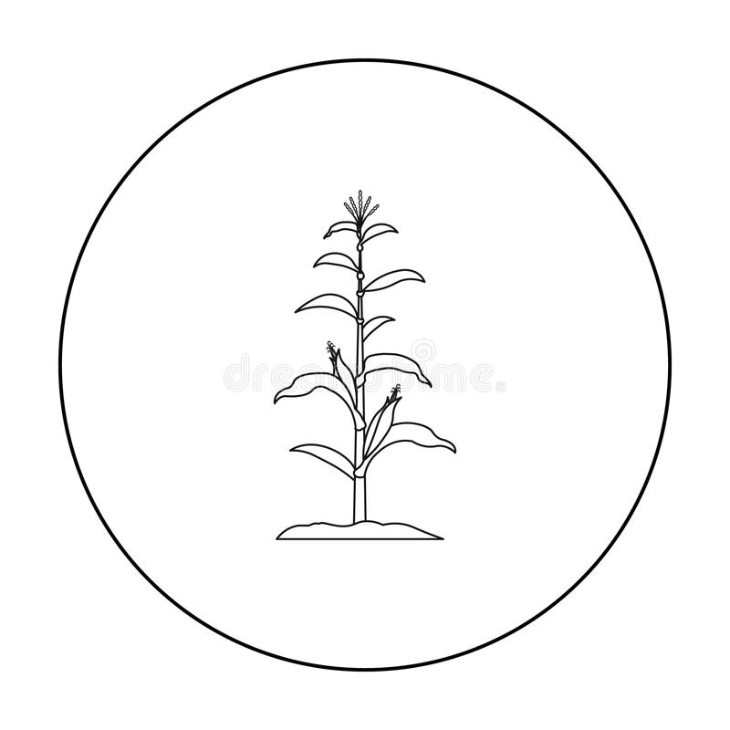 Kukurydzany ikona kontur Pojedyncza rośliny ikona od dużego gospodarstwa rolnego, ogród, rolnictwo kontur ilustracji