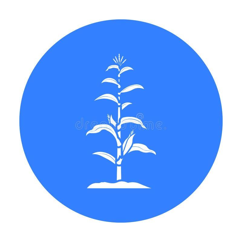 Kukurydzany ikony czerń Pojedyncza rośliny ikona od dużego gospodarstwa rolnego, ogród, rolnictwa czerń ilustracji