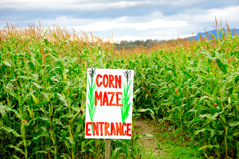 kukurydzany labirynt obrazy stock