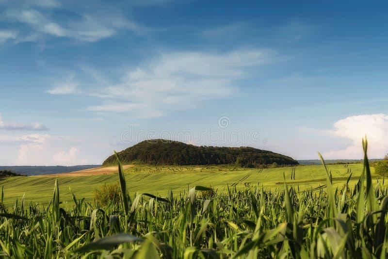 Kukurydzany pole blisko gór obrazy royalty free