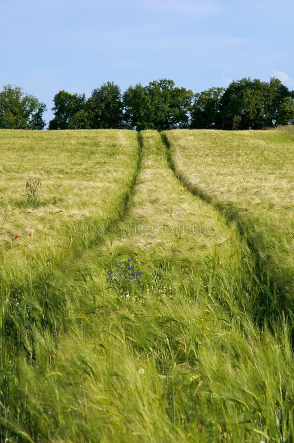 kukurydzany pole tropi ciągnika fotografia royalty free