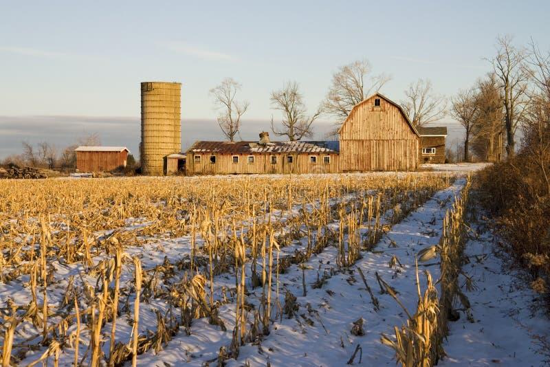 kukurydzany stajni pole fotografia stock