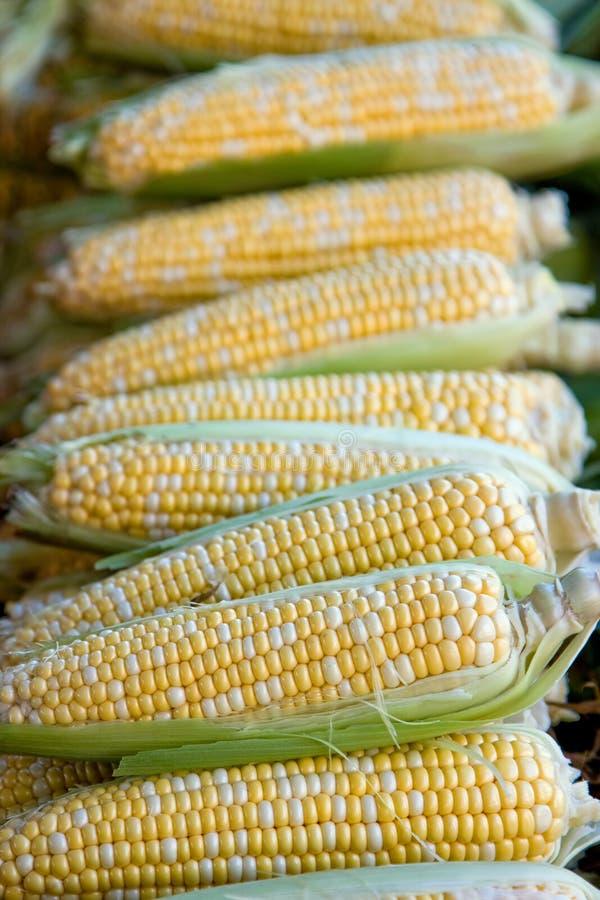kukurydziane kolby zdjęcie stock
