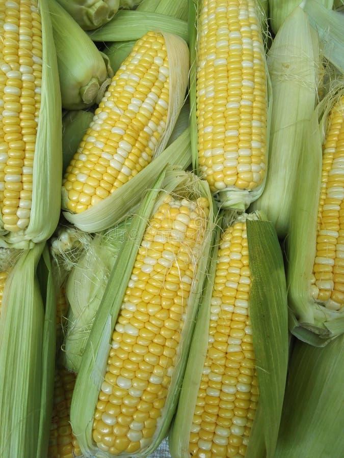 Kukurydzy cob zdjęcie stock