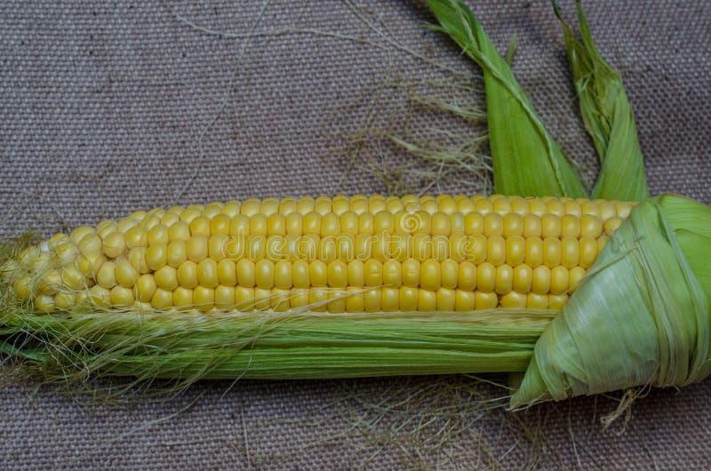 Kukurydzy cob szczegół zdjęcie stock