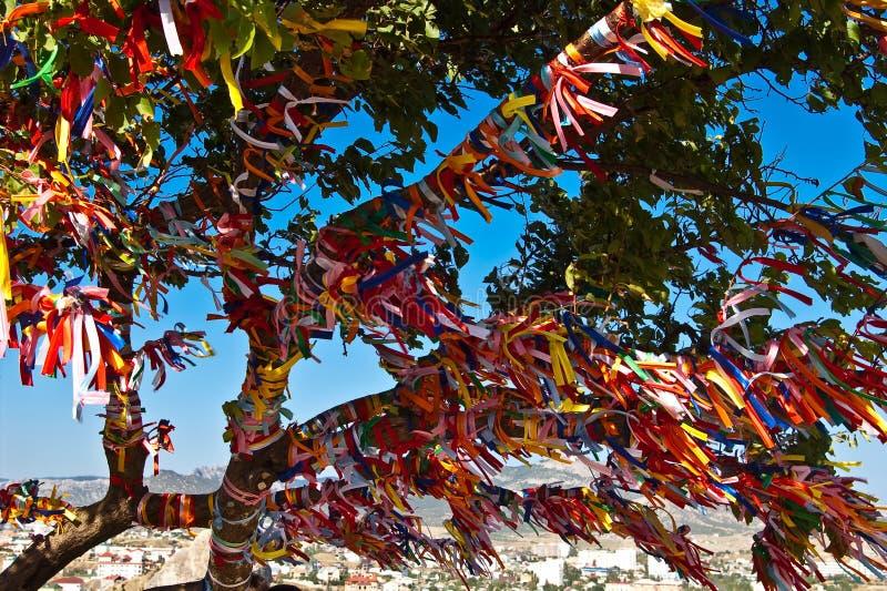 kulör bandtree royaltyfri fotografi