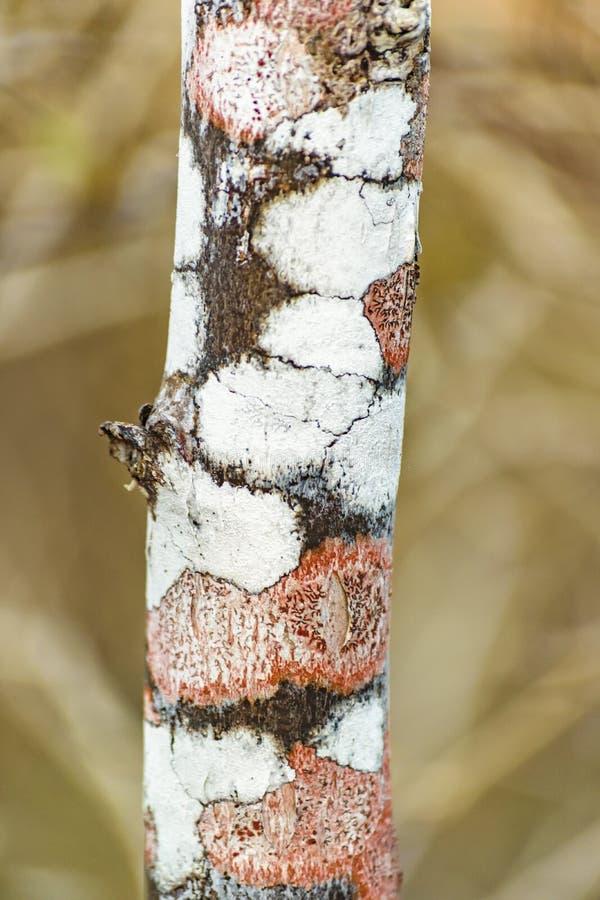 Kulör Closeup för trädstam arkivbild