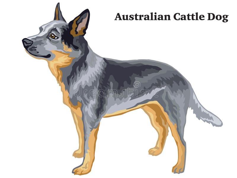 Kulör dekorativ stående stående av den australiska illustrationen för nötkreaturhundvektor stock illustrationer