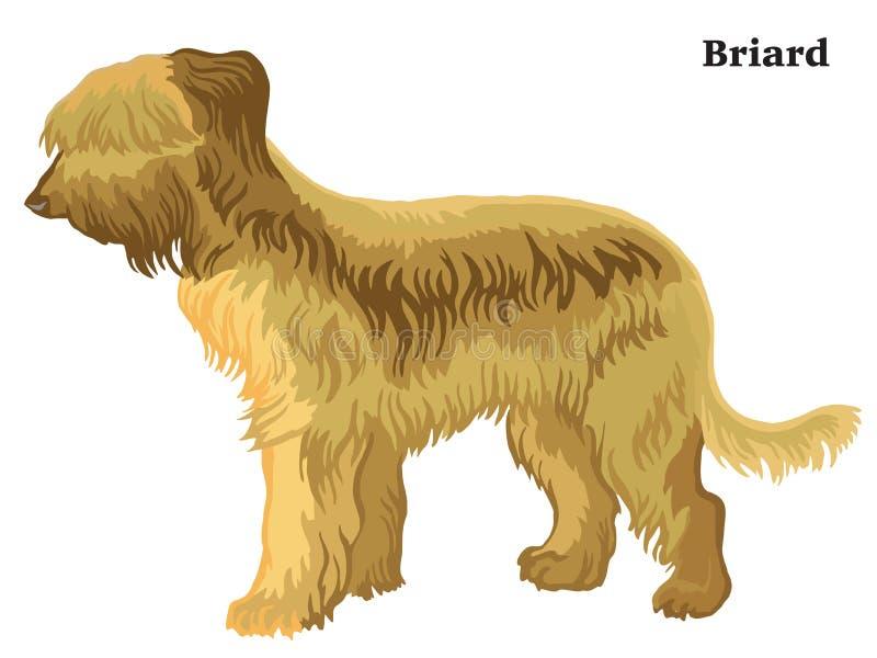 Kulör dekorativ stående stående av den Briard vektorillustrationen royaltyfri illustrationer