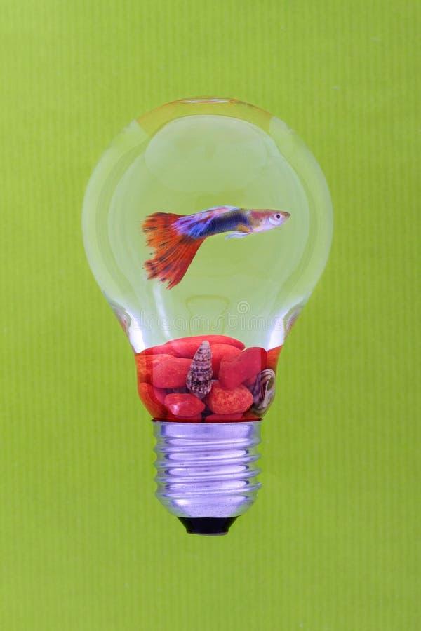 Kulör fisk i behållare royaltyfri fotografi