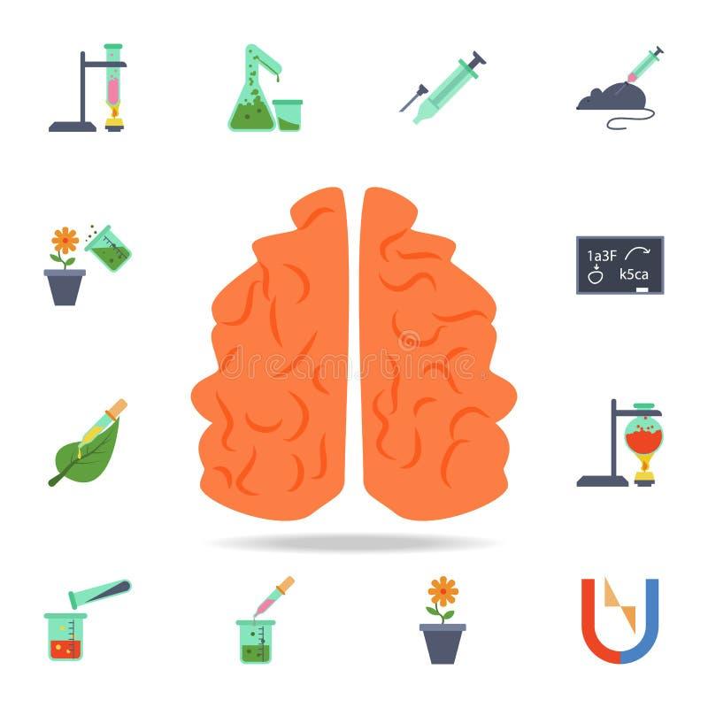 kulör hjärnsymbol Detaljerad uppsättning av kulöra vetenskapssymboler Högvärdig grafisk design En av samlingssymbolerna för websi vektor illustrationer