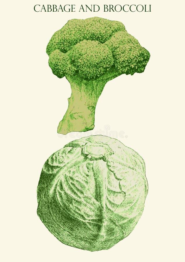 Kulör illustration med kål och brocoli stock illustrationer