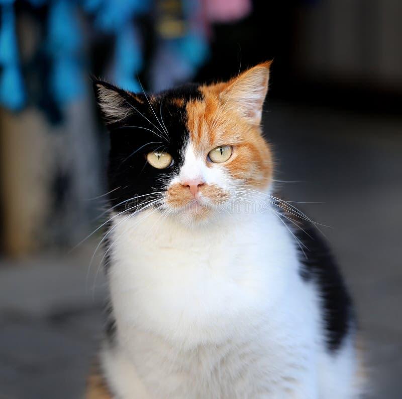 Kulör katt tre royaltyfria bilder