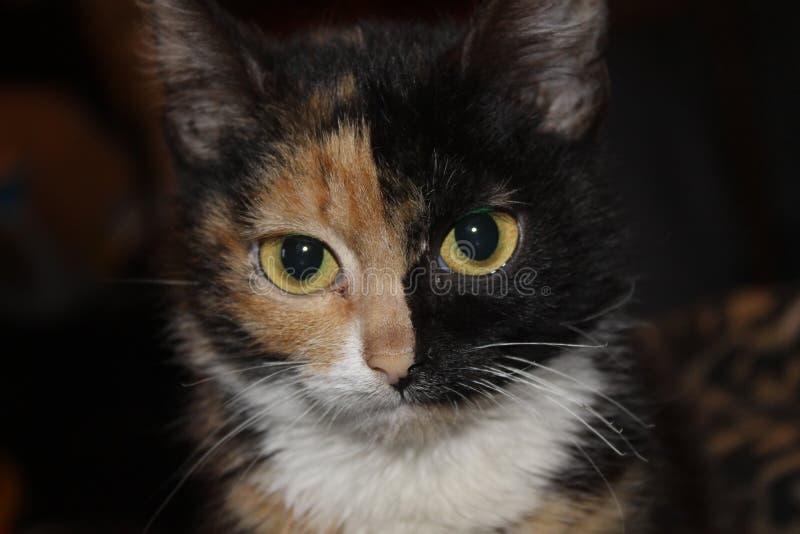 Kulör katt tre arkivfoton