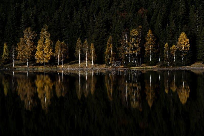 Kulör trädreflexion i en bergsjö arkivfoto