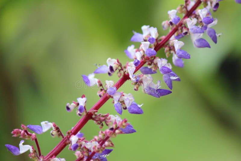 Kulör tropisk blomma för vit och för lila arkivfoton